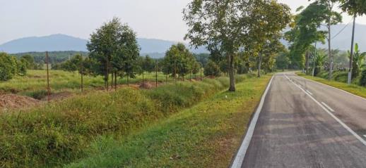 Segamat_Agriculture